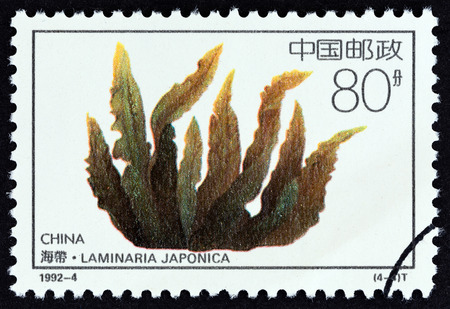 estampilla: CHINA - CIRCA 1992: A stamp printed in China from the Offshore Breeding Projects  issue shows Laminaria japonica, circa 1992. Editorial