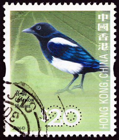 pica: HONG KONG - CIRCA 2006: A stamp printed in Hong Kong from the Birds  issue shows Common magpie (Pica pica), circa 2006.