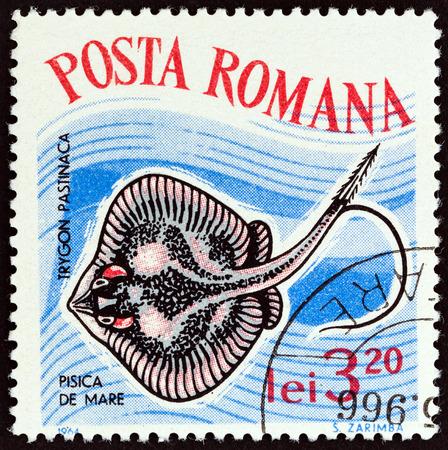 laevis: ROMANIA - CIRCA 1964: A stamp printed in Romania from the Fish  issue shows Common Stingray (Dasyatis Pastinaca), circa 1964. Editorial