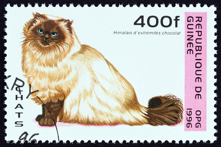 estampilla: GUINEA - CIRCA 1996: A stamp printed in Guinea from the Cats  issue shows Chocolate point Himalayan cat, circa 1996. Editorial