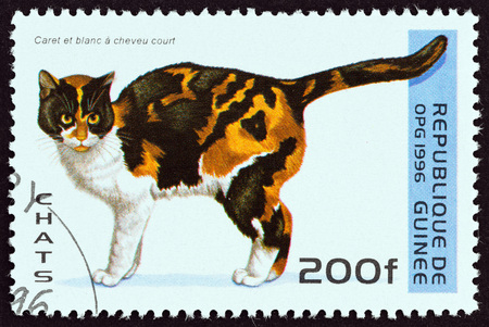 felis silvestris catus: GUINEA - CIRCA 1996: A stamp printed in Guinea from the Cats  issue shows  Tortoiseshell and White Shorthair cat, circa 1996. Editorial
