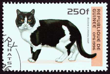estampilla: GUINEA - CIRCA 1996: A stamp printed in Guinea from the Cats  issue shows Bicolour shorthair cat, circa 1996.