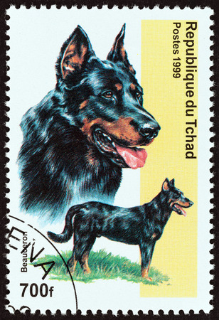 CHAD - CIRCA 1999: A stamp printed in Chad from the Dogs  issue shows Beauceron Dog, circa 1999.