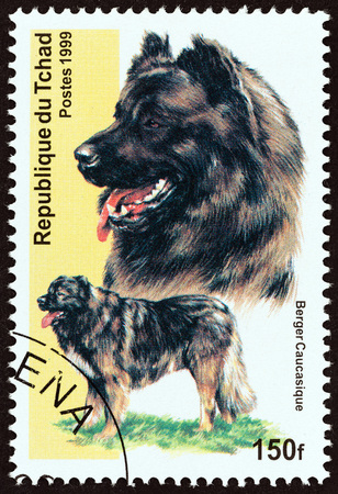 CHAD - CIRCA 1999: A stamp printed in Chad from the Dogs  issue shows Caucasian Shepherd Dog, circa 1999. Editorial
