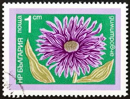 chinese postage stamp: BULGARIA - CIRCA 1974: A stamp printed in Bulgaria from the Garden Flowers  issue shows China Aster (Callistephus chinensis), circa 1974.