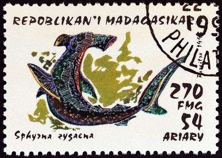 """pez martillo: Madagascar - alrededor de 1993: Un sello impreso en Madagascar desde la edición de """"Tiburones"""" muestra el pez martillo (Sphyrna zygaena), alrededor del año 1993."""