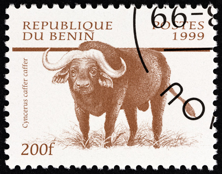 estampilla: BENIN - CIRCA 1999: A stamp printed in Benin from the Mammals  issue shows African buffalo (Syncerus caffer caffer), circa 1999.
