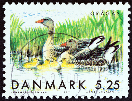 DENMARK - CIRCA 1999: A stamp printed in Denmark from the Migratory Birds  issue shows Greylag goose (Anser anser) with goslings, circa 1999.
