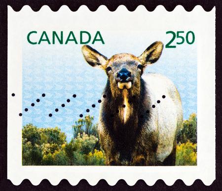 canada stamp: CANADA - CIRCA 2014: A stamp printed in Canada shows Elk (Cervus elaphus canadensis), circa 2014. Editorial