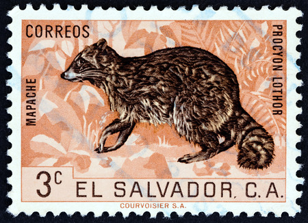 """poststempel: EL SALVADOR - CIRCA 1963: Eine Briefmarke gedruckt in El Salvador von der """"Fauna"""" -Ausgabe zeigt Waschbär (Procyon Lothor), circa 1963. Editorial"""