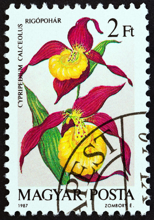 estampilla: HUNGARY - CIRCA 1987: A stamp printed in Hungary from the Orchids  issue shows Cypripedium calceolus, circa 1987. Editorial
