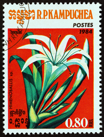 cambodge: KAMPUCHEA - CIRCA 1984: A stamp printed in Kampuchea from the Flowers issue shows Himenoballis sp., circa 1984.