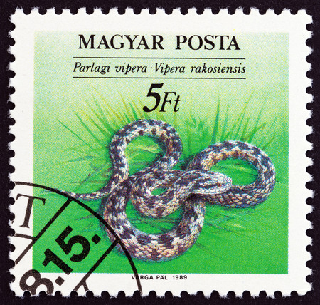 danubian: HUNGARY - CIRCA 1989: A stamp printed in Hungary from the Endangered Reptiles issue shows Danubian meadow viper (Vipera ursinii rakosiensis), circa 1989.