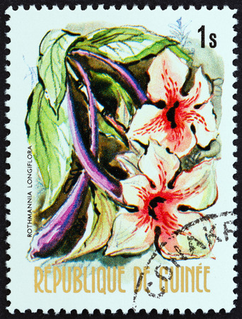 estampilla: GUINEA - CIRCA 1974: A stamp printed in Guinea from the Flowers of Guinea issue shows Rothmannia longiflora, circa 1974.