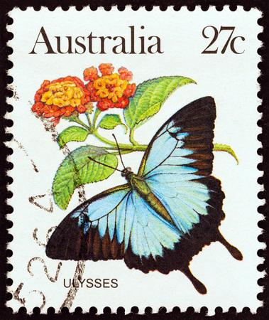 estampilla: AUSTRALIA - CIRCA 1981: A stamp printed in Australia shows a Papilio Ulysses butterfly, circa 1981. Editorial