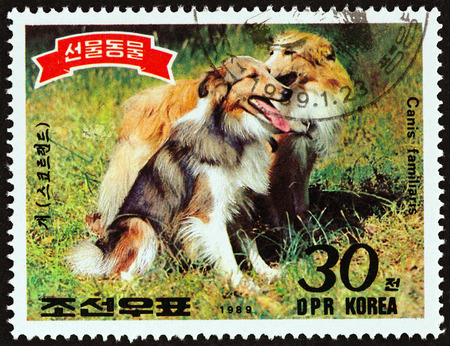 NORTH KOREA - CIRCA 1989: A stamp printed in North Korea from the Animals presented to Kim Il Sung issue shows Rough collies, circa 1989.