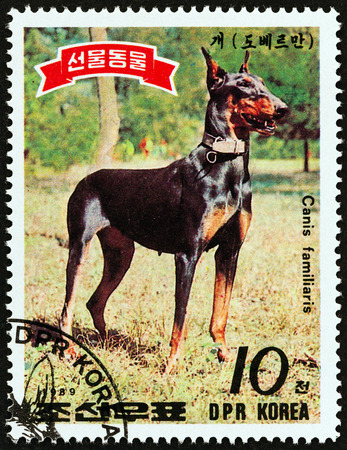 NORTH KOREA - CIRCA 1989: A stamp printed in North Korea from the Animals presented to Kim Il Sung issue shows Dobermann Pinscher, circa 1989.