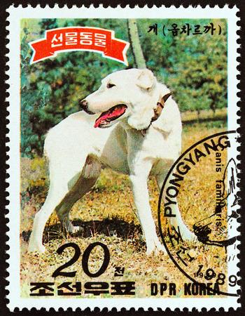 NORTH KOREA - CIRCA 1989: A stamp printed in North Korea from the Animals presented to Kim Il Sung issue shows Labrador, circa 1989.
