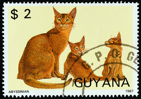 estampilla: GUYANA - CIRCA 1988: A stamp printed in Guyana from the Cats issue shows Abyssinian, circa 1988. Editorial
