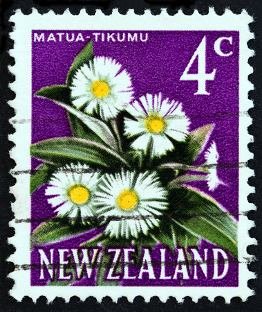 estampilla: NEW ZEALAND - CIRCA 1967: A stamp printed in New Zealand shows Matua tikumu (Mountain daisy), circa 1967. Editorial