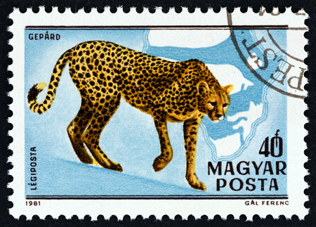 centenary: HUNGARY - CIRCA 1981: A stamp printed in Hungary from the Birth centenary of Kalman Kittenberger, explorer and zoologist issue shows Cheetah, circa 1981.