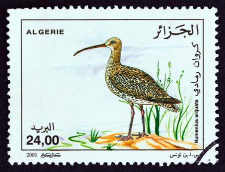 ALGERIA - CIRCA 2001: A stamp printed in Algeria from the Waterfowl issue shows Eurasian curlew (Numenius arquata), circa 2001.