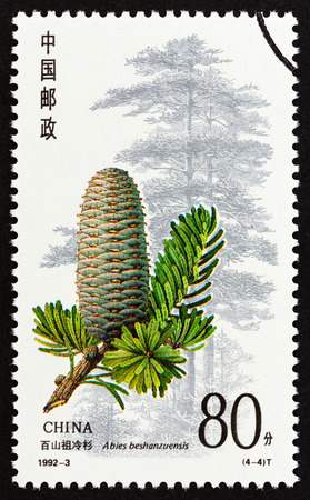 CHINA - CIRCA 1992: A stamp printed in China from the Conifers issue shows Abies beshanzuensis, circa 1992. Editorial