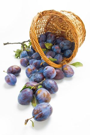 Fresh picked plums scattered from wicker basket isolated on white background photo