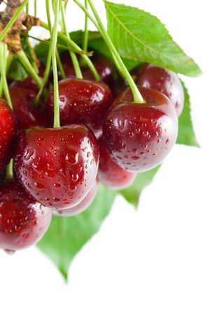 Cherries. Bunch of fresh ripe cherries close-up with leaves and stems isolated on white background. Stock Photo