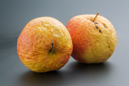 Two old apples. Pair of whole overripe wrinkled old apples close up on neutral background.