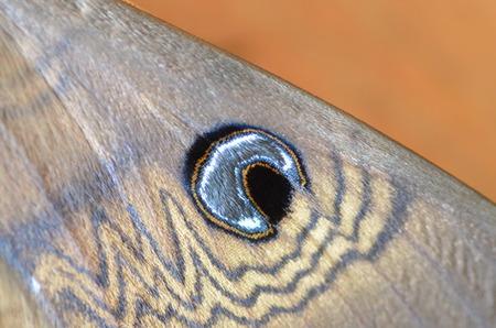 marking up: ala de la polilla de cerca con el ojo marcado Foto de archivo