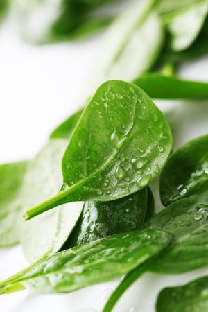 espinaca: Espinacas frescas hojas con gotas de agua sobre fondo blanco Foto de archivo