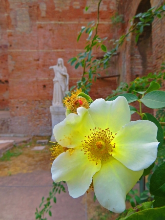 vestal: House of the Vestal Virgins and garden in the Ancient Roman Forum in Rome, Italy