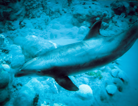 a mirage: Dolphin at Mirage Hotel  Las Vegas Nevada