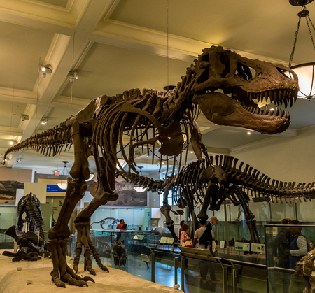 sciences: New York City Museum of Natural Sciences Dinosaurs