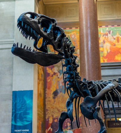 natural sciences: New York City Museum of Natural Sciences Dinosaurs