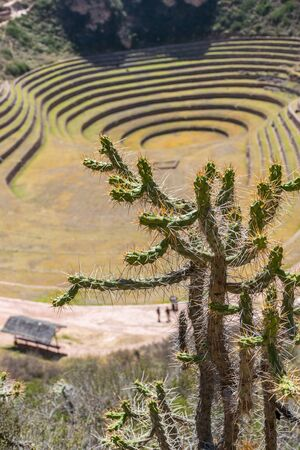 Moray contained large Inca made concentric ring terraces used for mass agriculture experiments in the various microclimates they created on the different terraces in Peru.