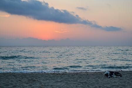 Coast. Early morning. Dog sleeping on the beach. Greece Stock Photo
