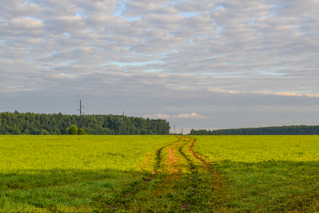 Country road through the field. Sky with clouds