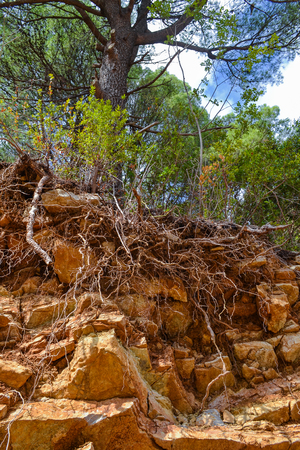 Texture of the rock. Large rocks exfoliate from the rock. The roots of the tree hang down
