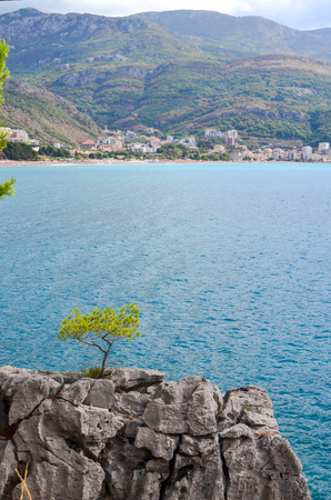 Sea view from the mountain. Adriatic Sea. Young pine grows on a bare rock