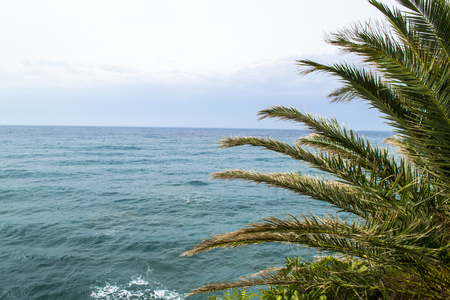 Sea view from the mountain. Palm leaves in the frame. Montenegro. The Budva Riviera
