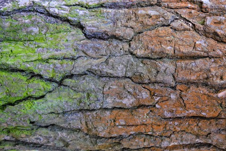 Bark of old tree with green and red moss. Stock Photo