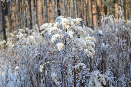 Dry grass and leaves covered with white frost and snow.