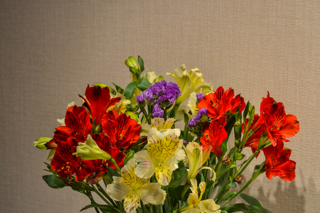 Alstroemeria or Peruvian lily close-up. Red and yellow. Brown background