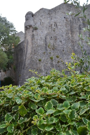 Green bushes on the background of the fortress wall. Old town fortress Budva, architecture of Montenegro. Stock Photo