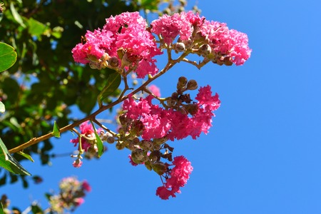 Branch with red flowers in blue sky. Spring background.