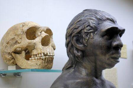 Skull and Neanderthal sculpture. Evolutionary Theory Paleontological Museum 2018 December 01 Editorial