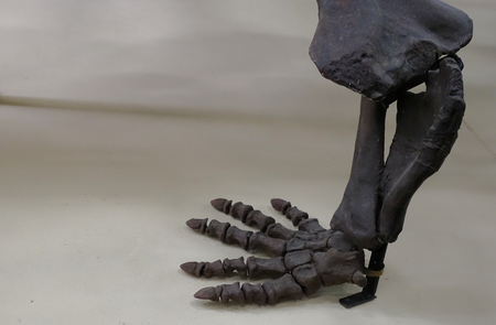 Black dinosaur paw skeleton closeup on stand 스톡 콘텐츠