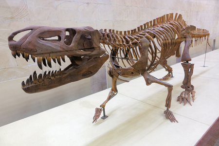 Skeletons of extinct reptiles, dinosaurs, four-legged reptiles Banco de Imagens